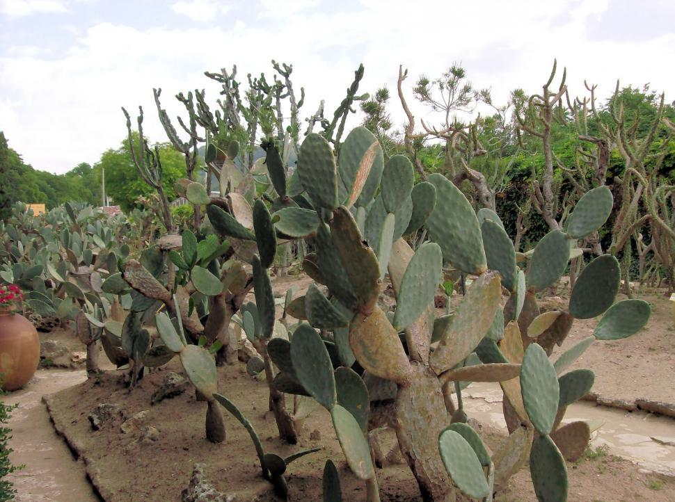 Download Free Stock HD Photo of Cactus garden Online