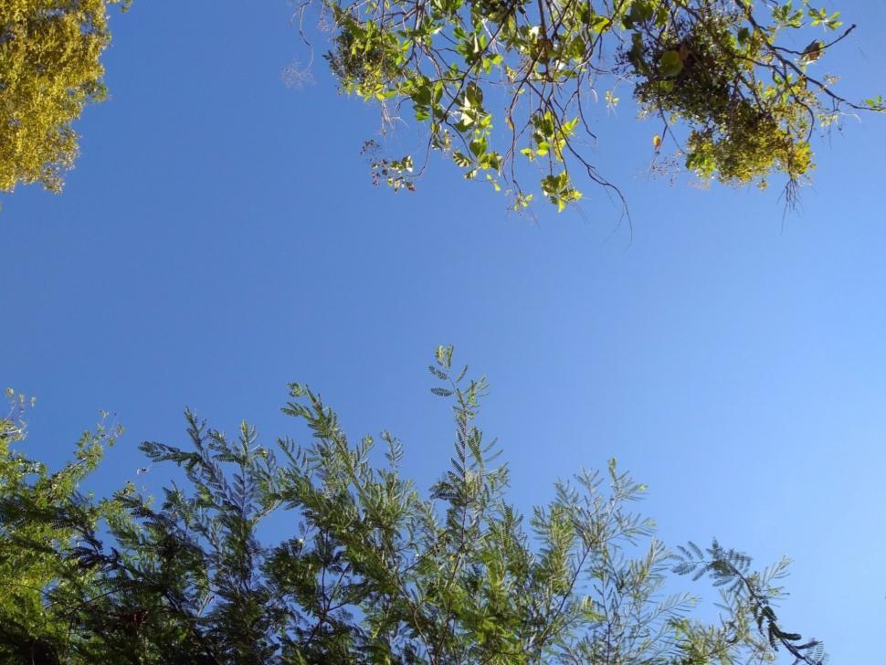 Download Free Stock Photo of Clear blue sky through branches of tropical trees