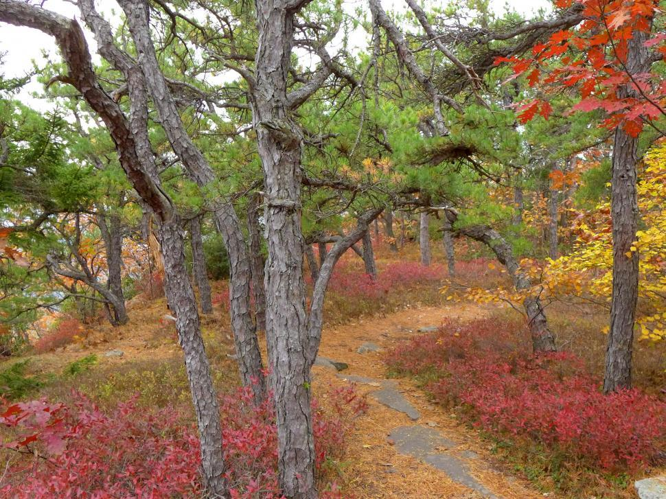 Download Free Stock Photo of Hiking Trail In Autumn