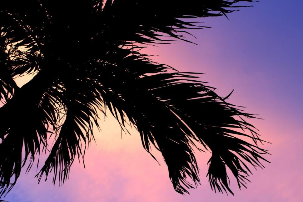 Download Free Stock Photo of Palm tree silhouette sunset background