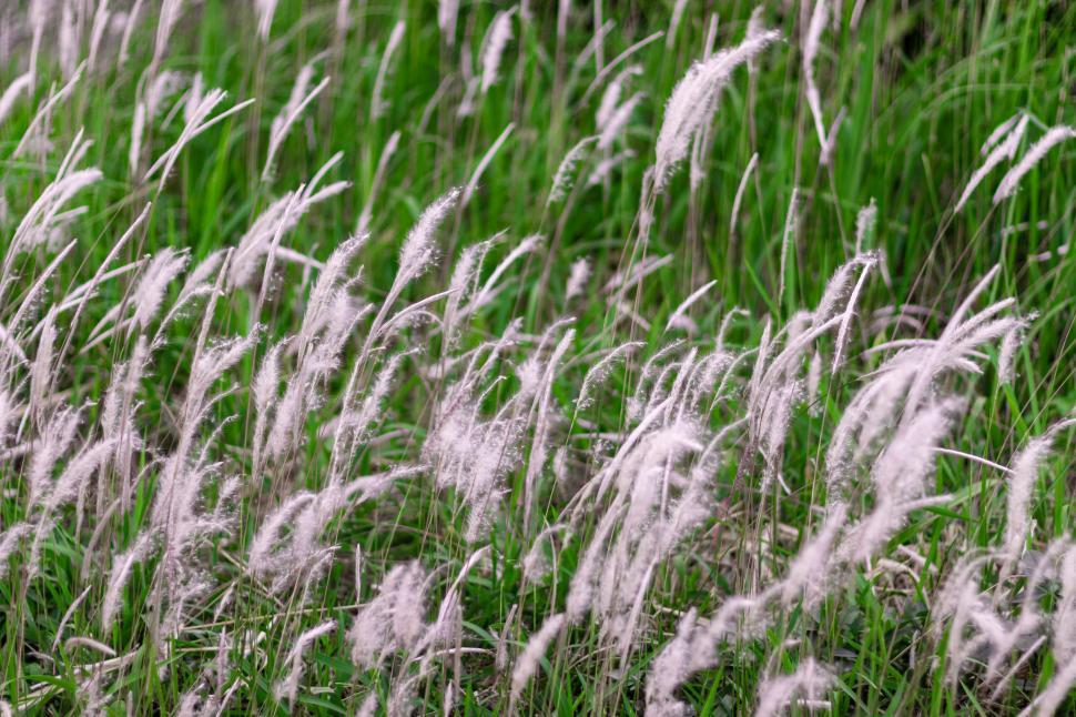 Download Free Stock HD Photo of Wild Cane  Online