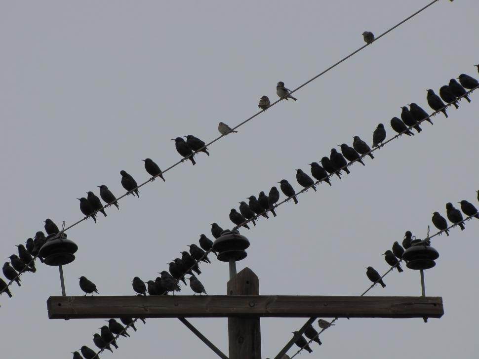 Download Free Stock HD Photo of  starling in winter on lines Online