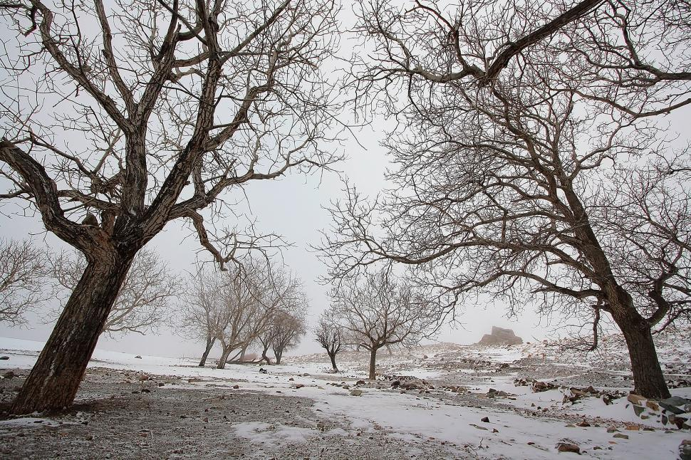 Download Free Stock HD Photo of Nature of Qom Province - Trees in Snow Online