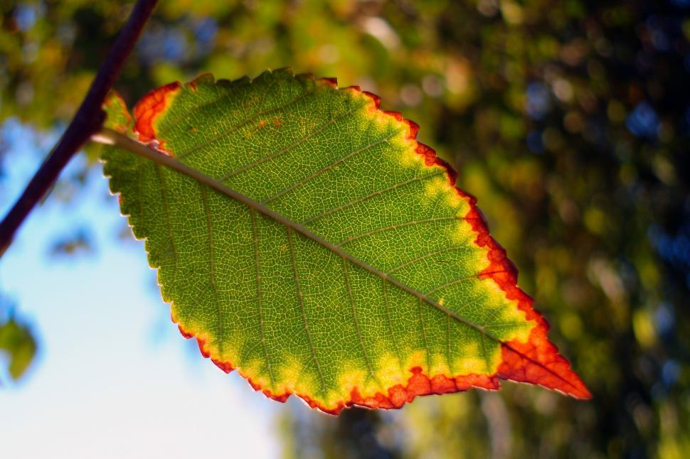 Download Free Stock HD Photo of Autumn leaf color - One Leaf Online