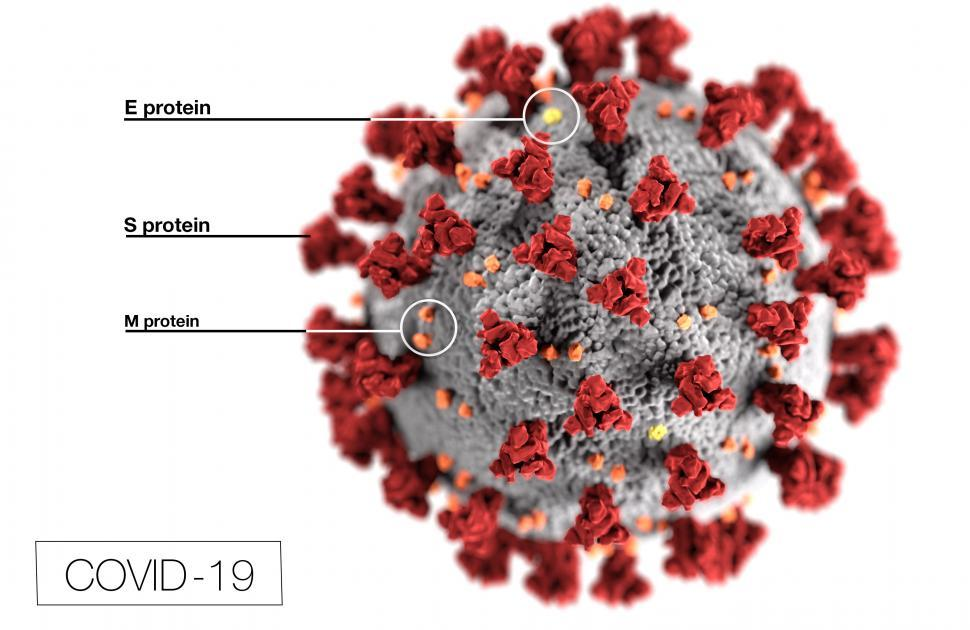Download Free Stock HD Photo of COVID-19 Coronavirus Illustration with labels Online