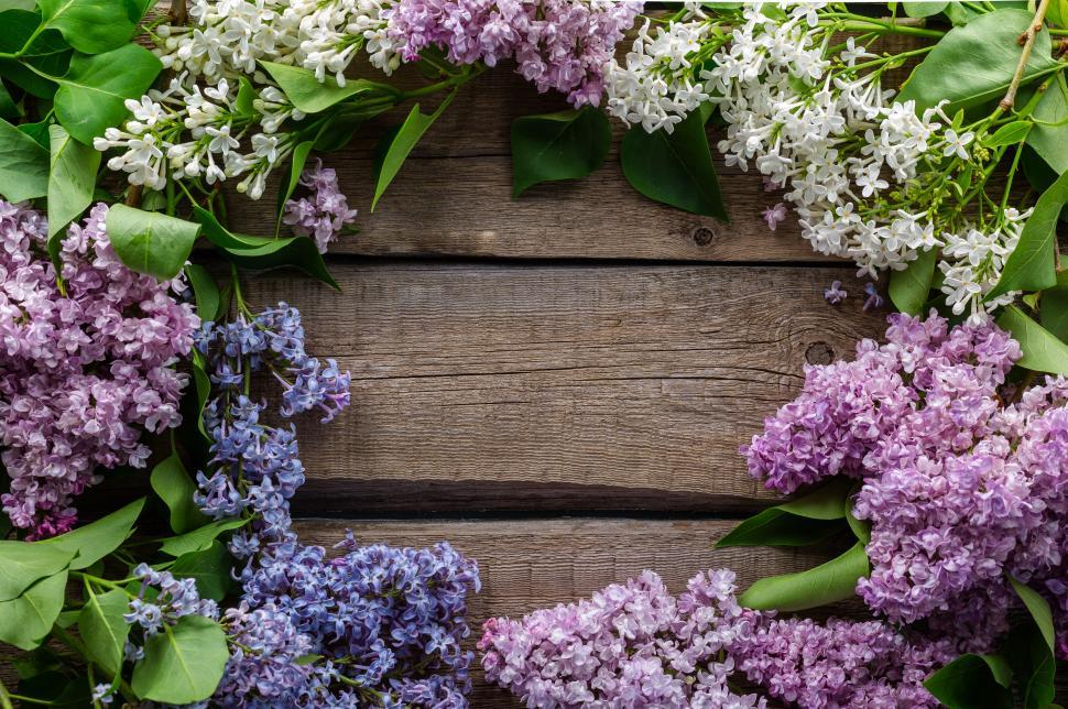 Download Free Stock Photo of white and violet flowers arranged in a circular shape