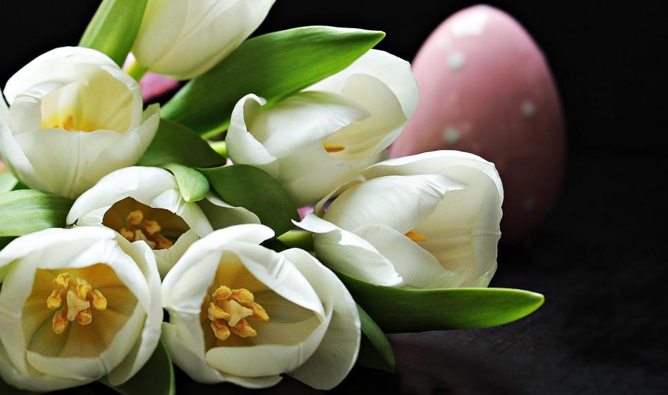 Download Free Stock Photo of White tulips and easter egg