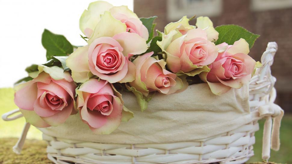 Download Free Stock Photo of Basket of Roses