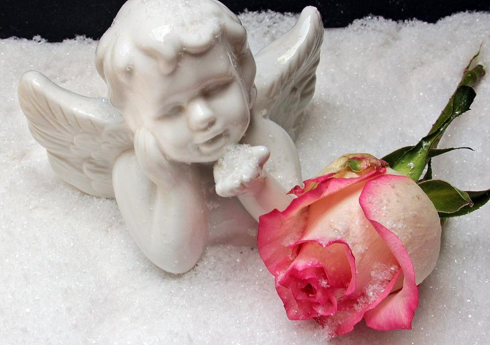 Download Free Stock Photo of Rose and angelic figureine