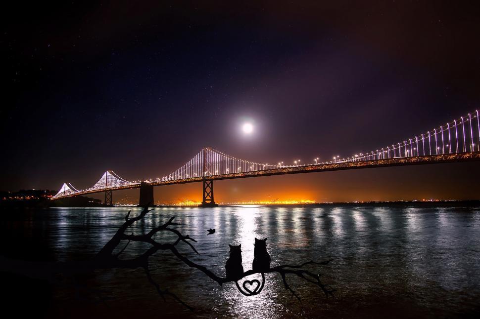 Download Free Stock Photo of Bay Bridge span at night
