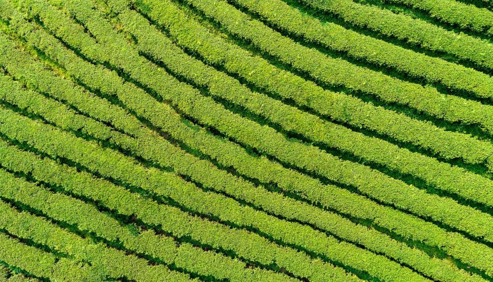 Download Free Stock HD Photo of Vegetation - Aerial View - Background Online