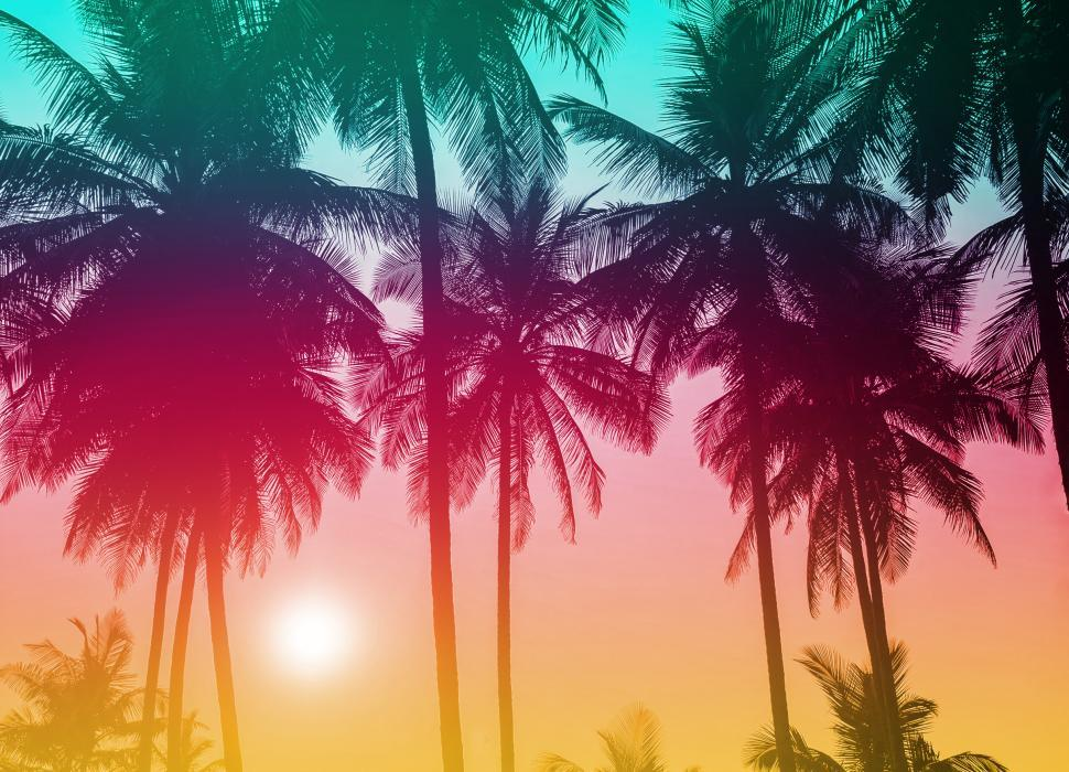 Download Free Stock Photo of Colorful Palm Trees - Tropical Sunset