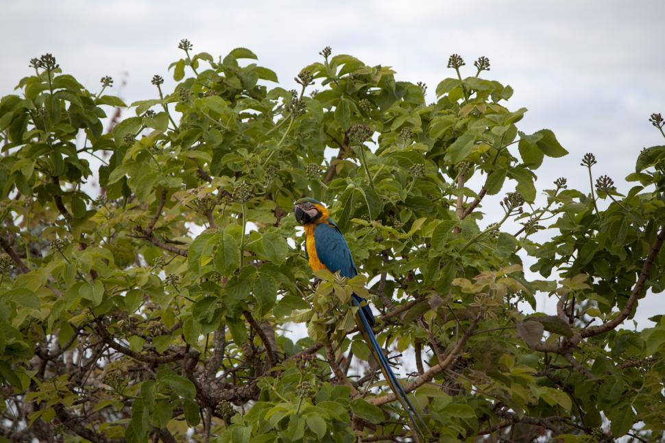 Download Free Stock Photo of Blue Macaw Bird