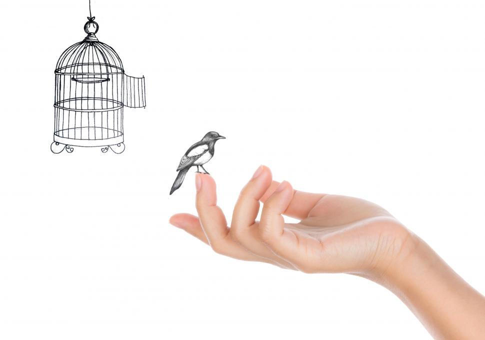 Download Free Stock Photo of Bird and Open Bird Cage - Freedom Concept