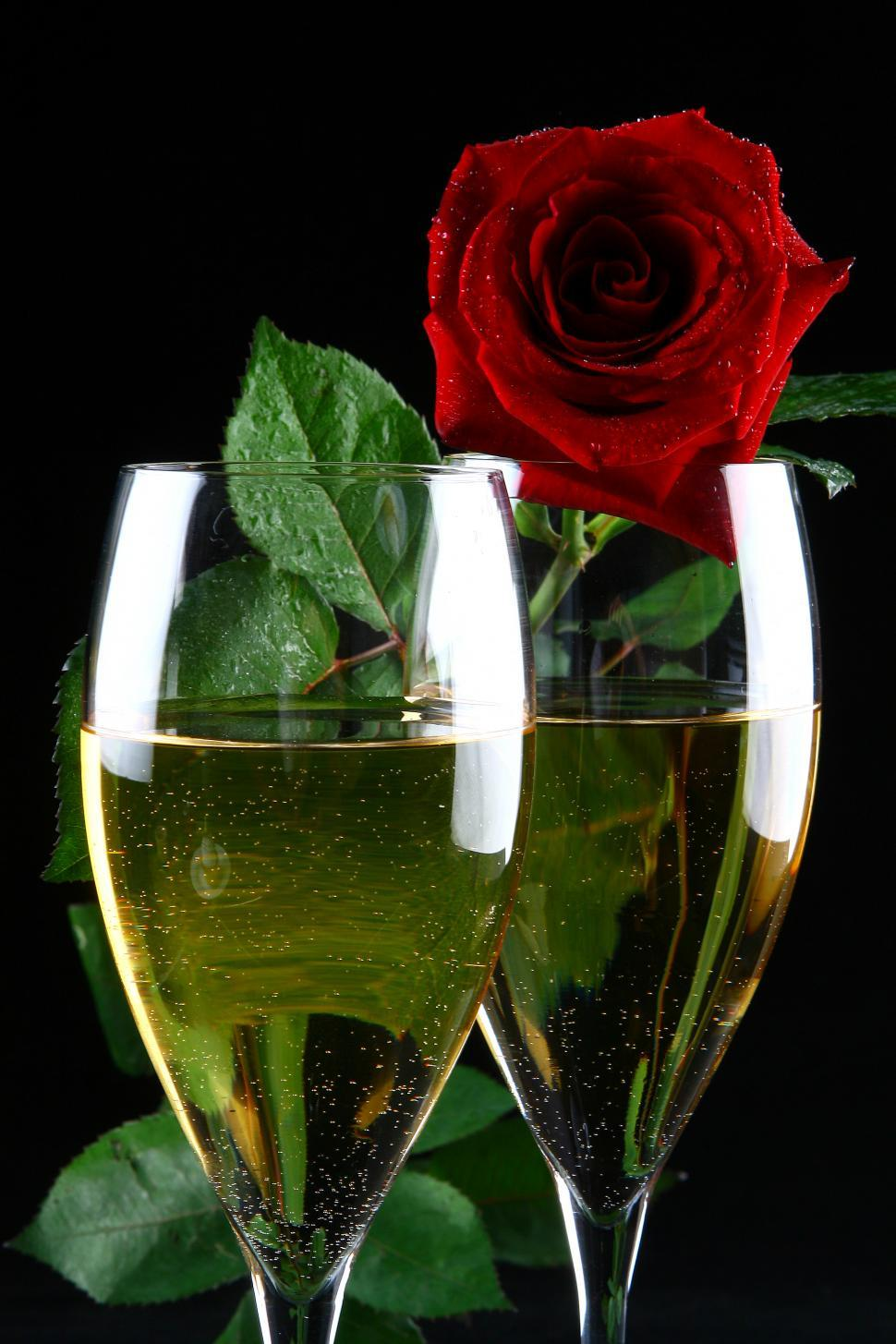 Download Free Stock HD Photo of two glasses of champagne and rose Online