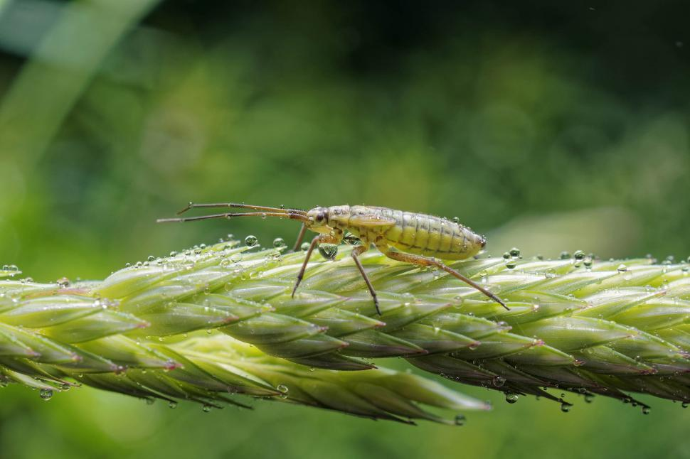 Download Free Stock HD Photo of Wet meadow plant bug Online