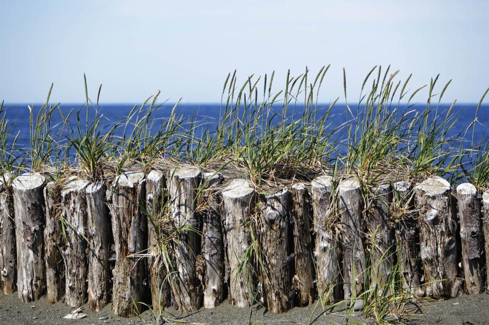 Download Free Stock Photo of Wooden beach barricade