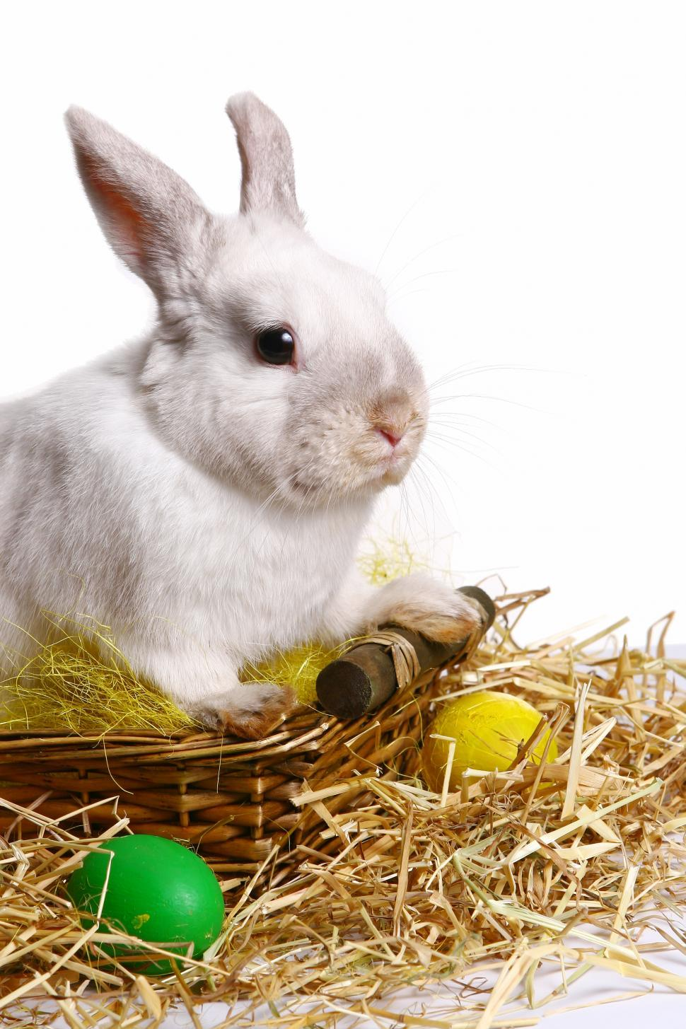 Download Free Stock Photo of rabbit with easter egg
