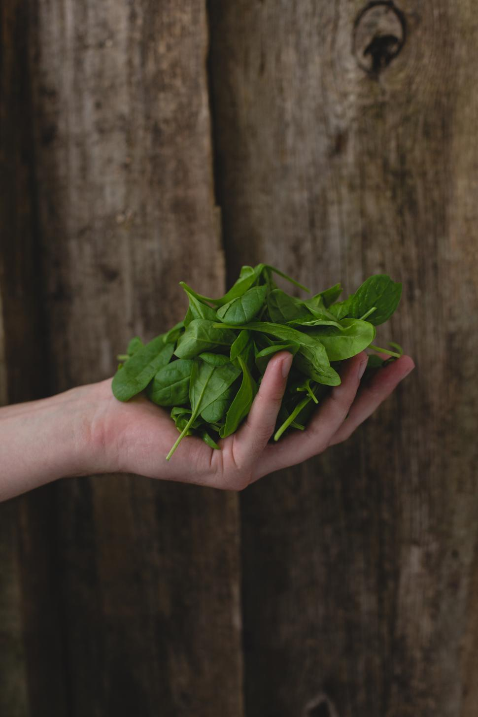 Download Free Stock HD Photo of Man holding spinach Online