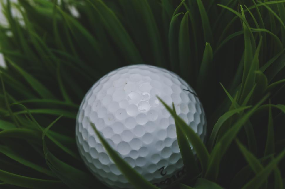 Download Free Stock Photo of Golf ball in the deep rough