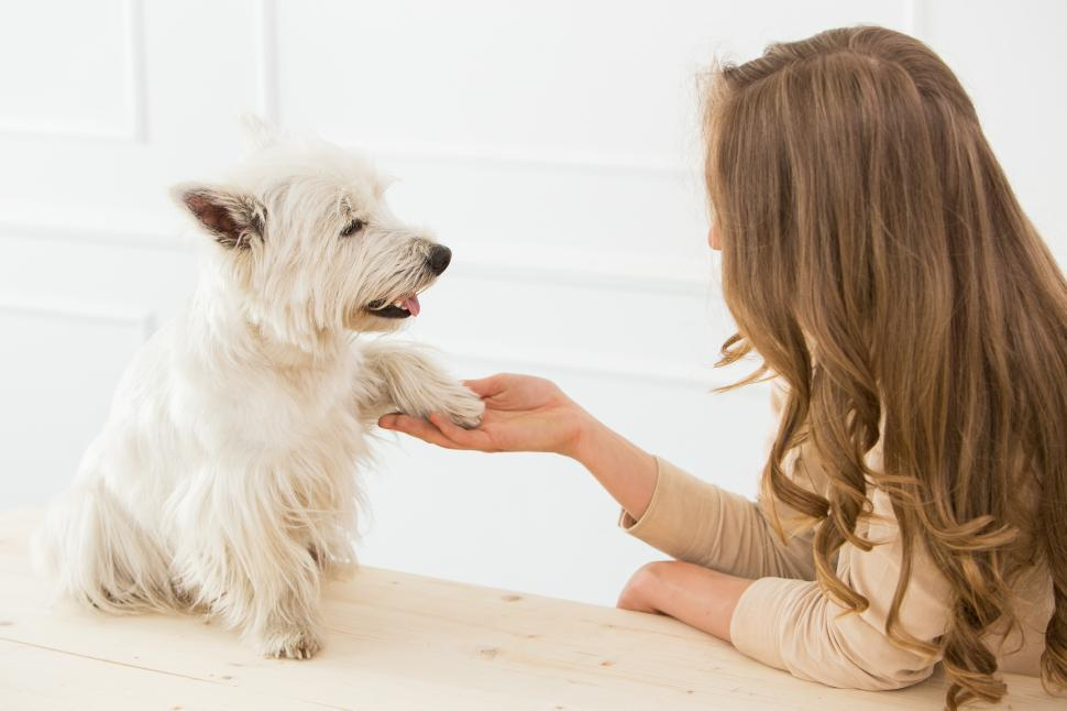 Download Free Stock Photo of Beautiful girl with dog shaking hands.