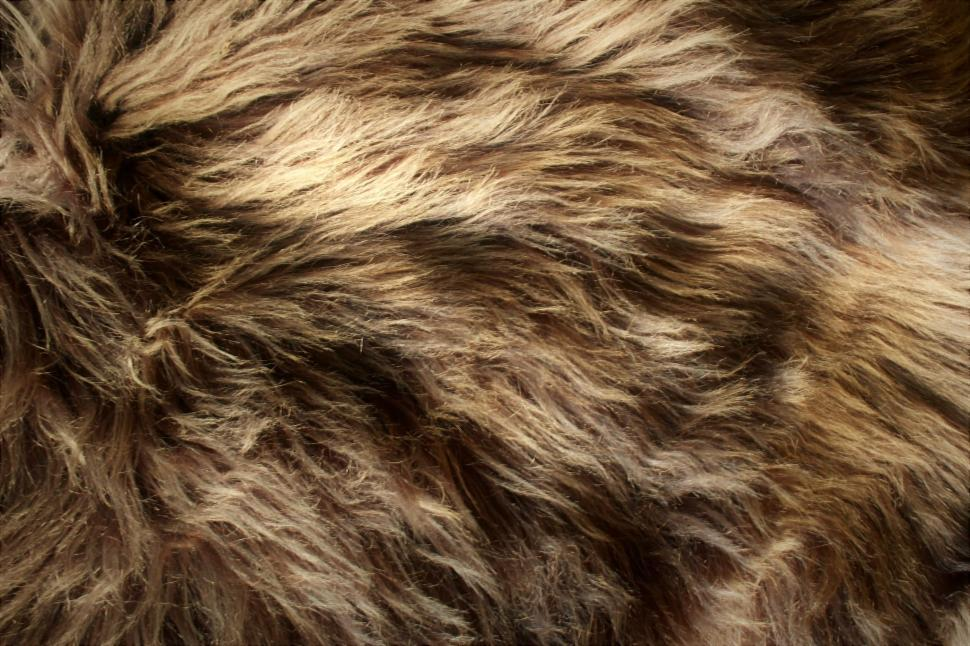 Download Free Stock Photo of Brown fluffy animal fur texture