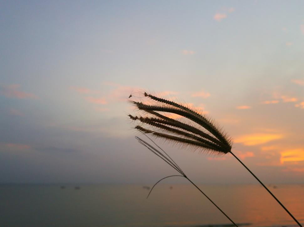 Download Free Stock Photo of Grass at dawn