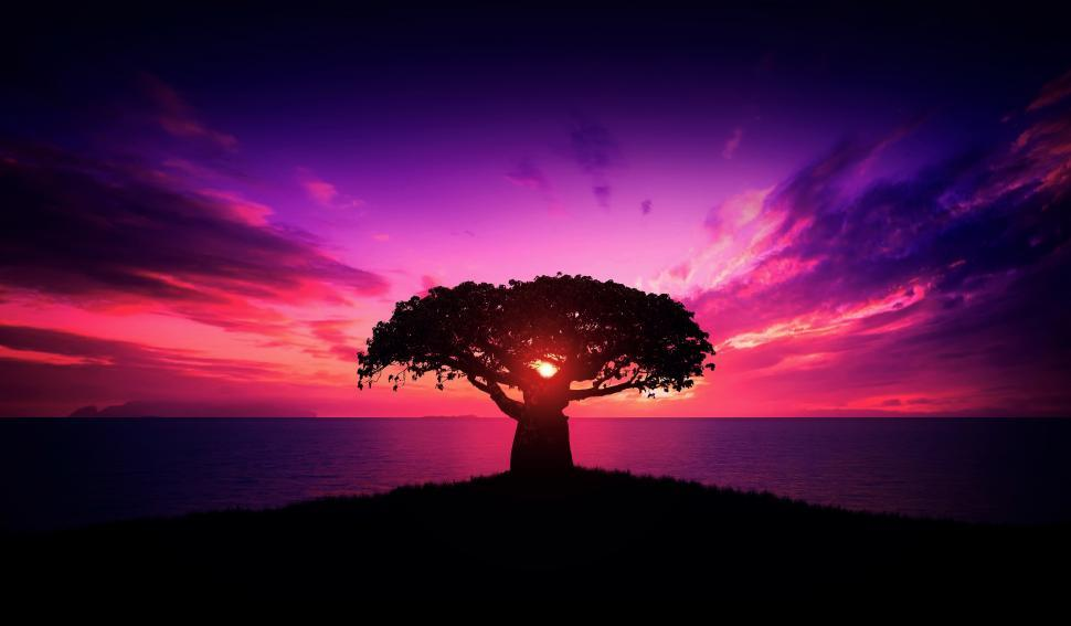 Download Free Stock Photo of Baobab Tree at Sunset - African Landscape - Calm - Relaxing - Tr