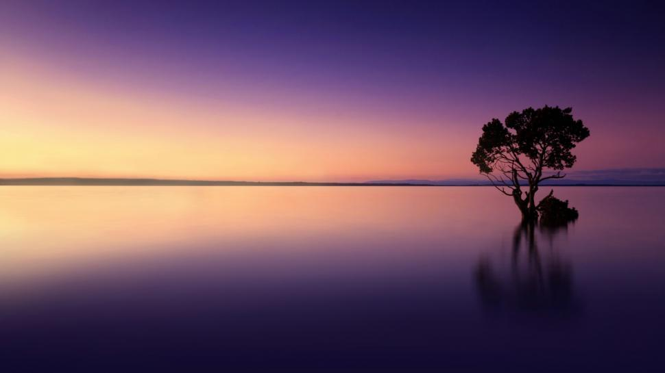 Download Free Stock Photo of Serene Landscape - Isolated Tree Reflected on Lake at Sunset