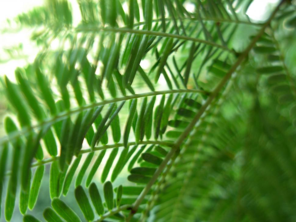 Download Free Stock HD Photo of Leafy View Online