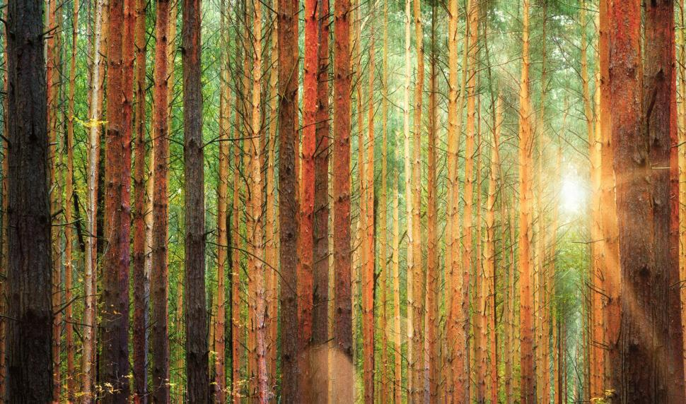 Download Free Stock Photo of Colorful Forest Illuminated by Sun Flare