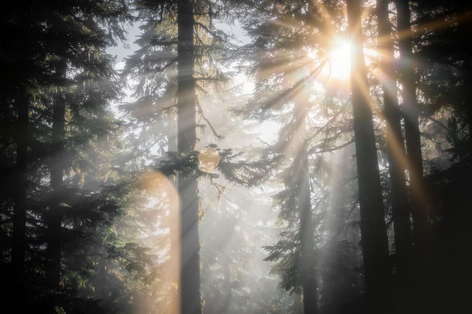 Download Free Stock Photo of Sun Shining Through Forest Trees