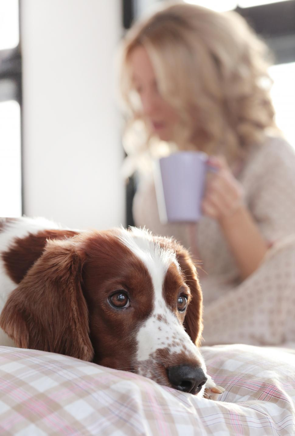 Download Free Stock Photo of Girl in bed in the background. Dog in front.