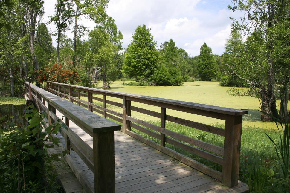 Download Free Stock HD Photo of swamp footbridge Online