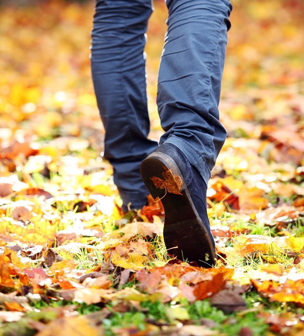 Download Free Stock Photo of Walking through a field of fallen leaves