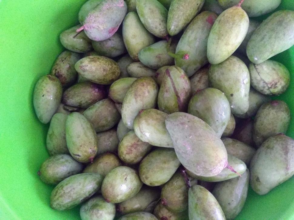 Download Free Stock Photo of Whole green mangoes