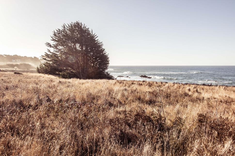 Download Free Stock Photo of One single tree in brown grass on the California coast