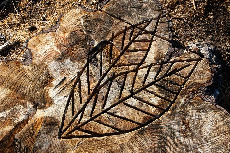 Download Free Stock Photo of Stump with leaf design cut into it