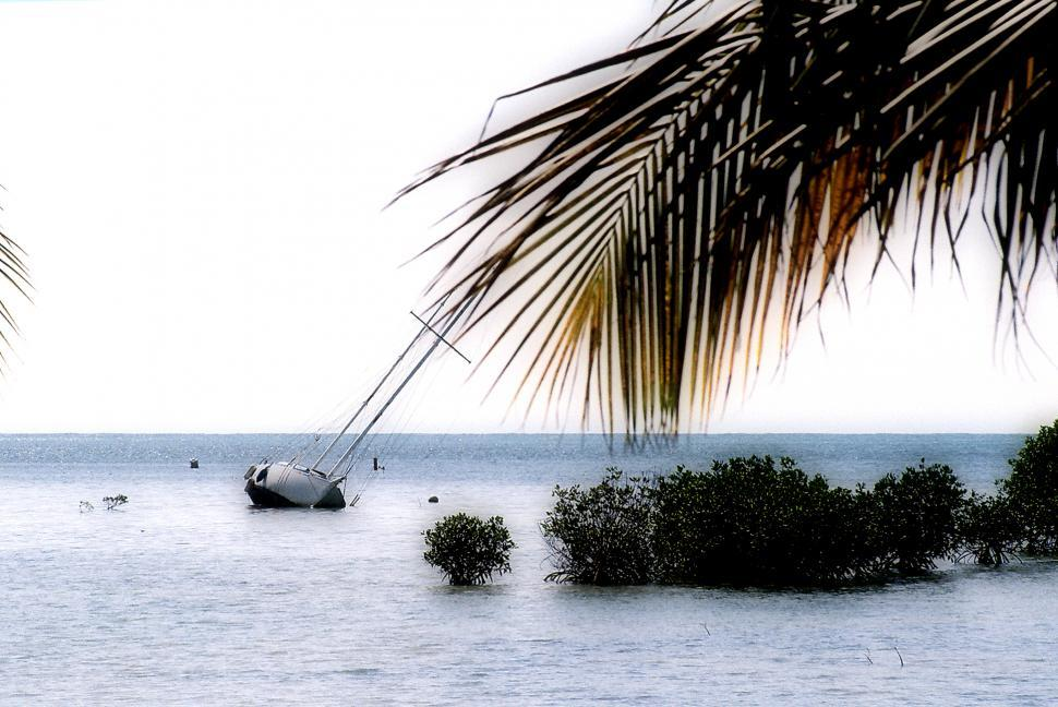 Download Free Stock HD Photo of Sailboat stuck on mangrove sandbar. Online
