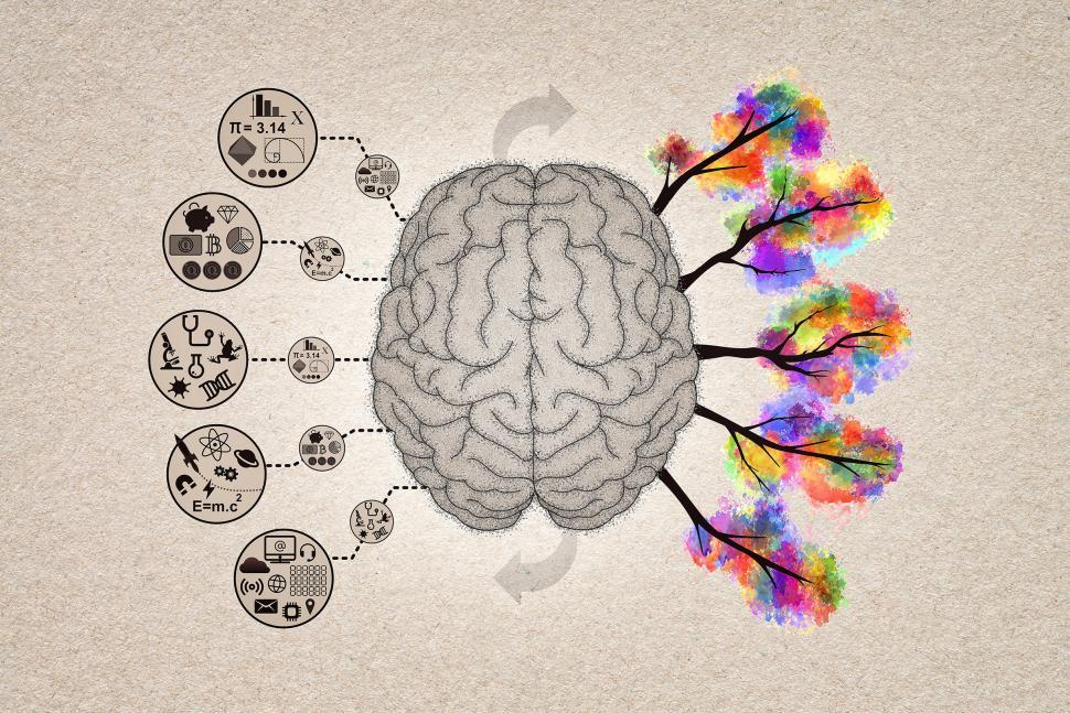 Download Free Stock Photo of Brain Functions Concept Illustration - Left Brain and Right Brai