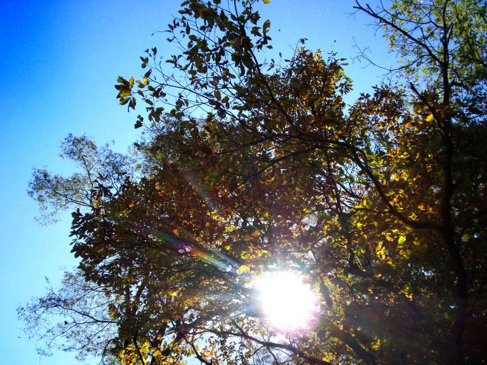 Download Free Stock Photo of Sunlight halo through the trees