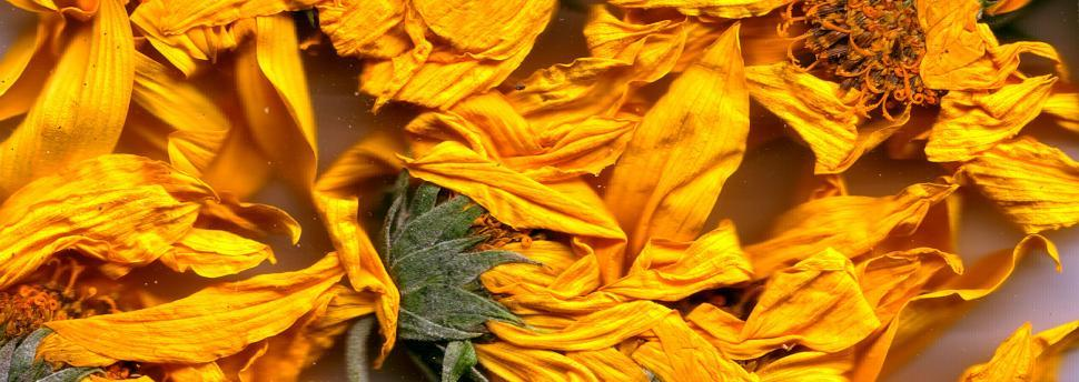 Download Free Stock HD Photo of Vegetal revolution Online