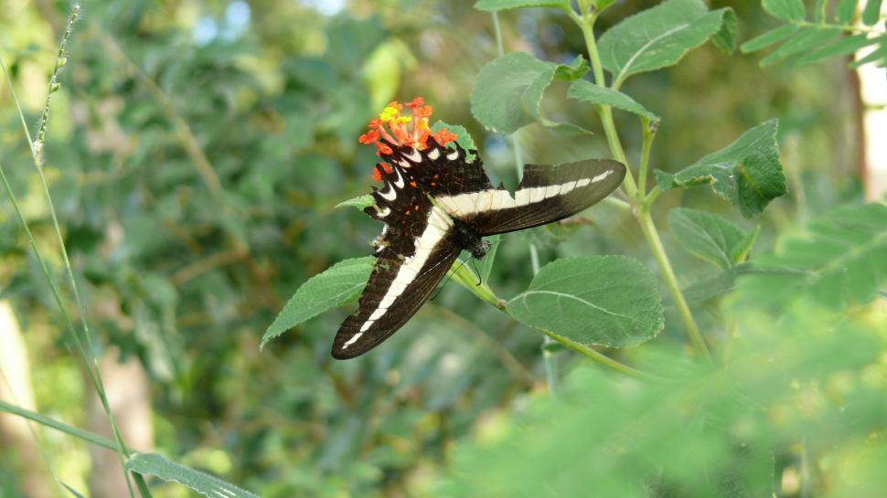 Download Free Stock Photo of Butterfly Warrior