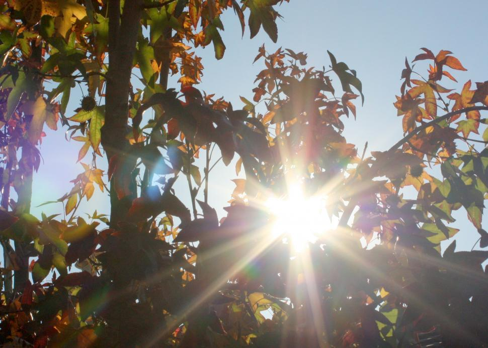 Download Free Stock HD Photo of Sun looking through a tree! Online