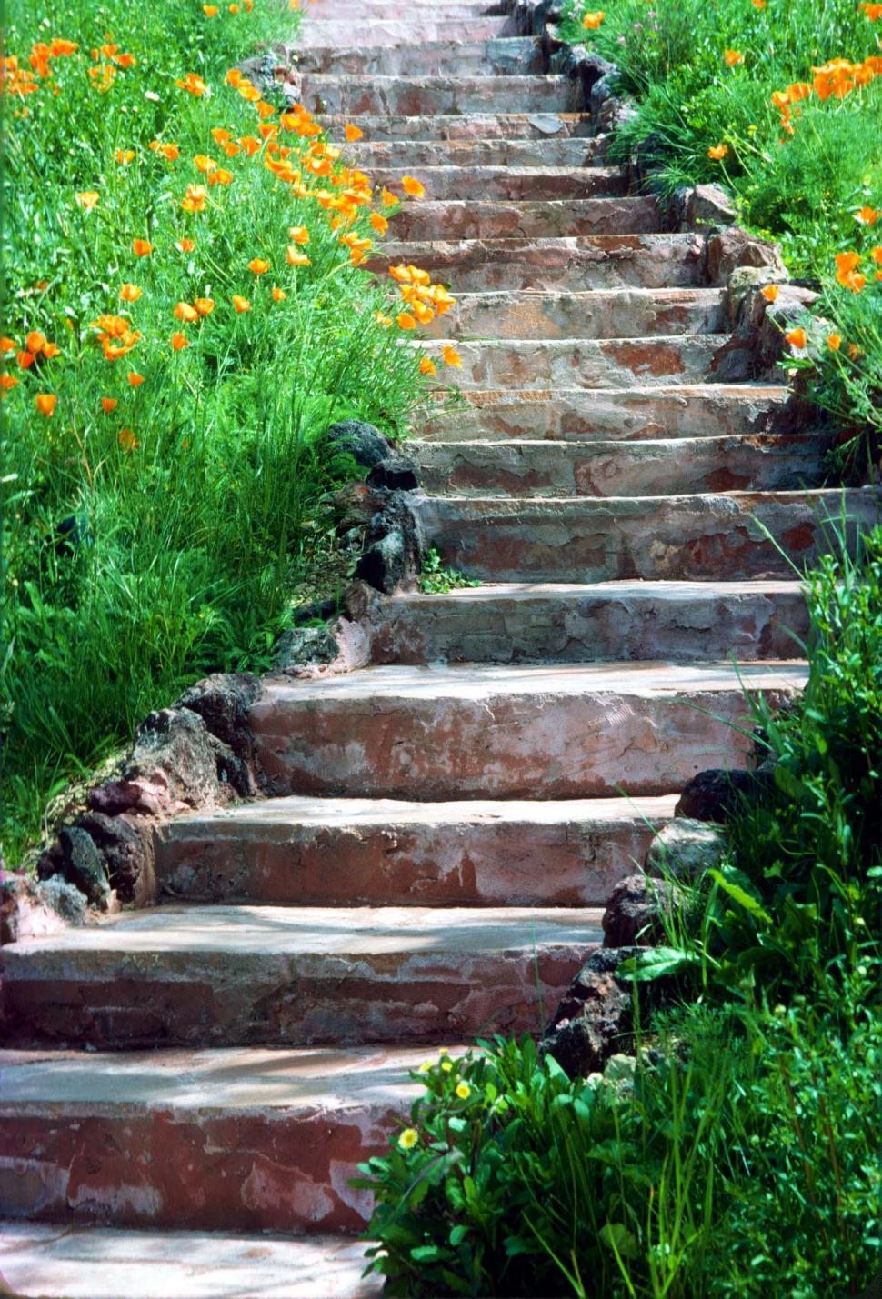 Download Free Stock Photo of fields flowers blooms wildflowers poppy orange blossoms spring steps stairs stone stairway