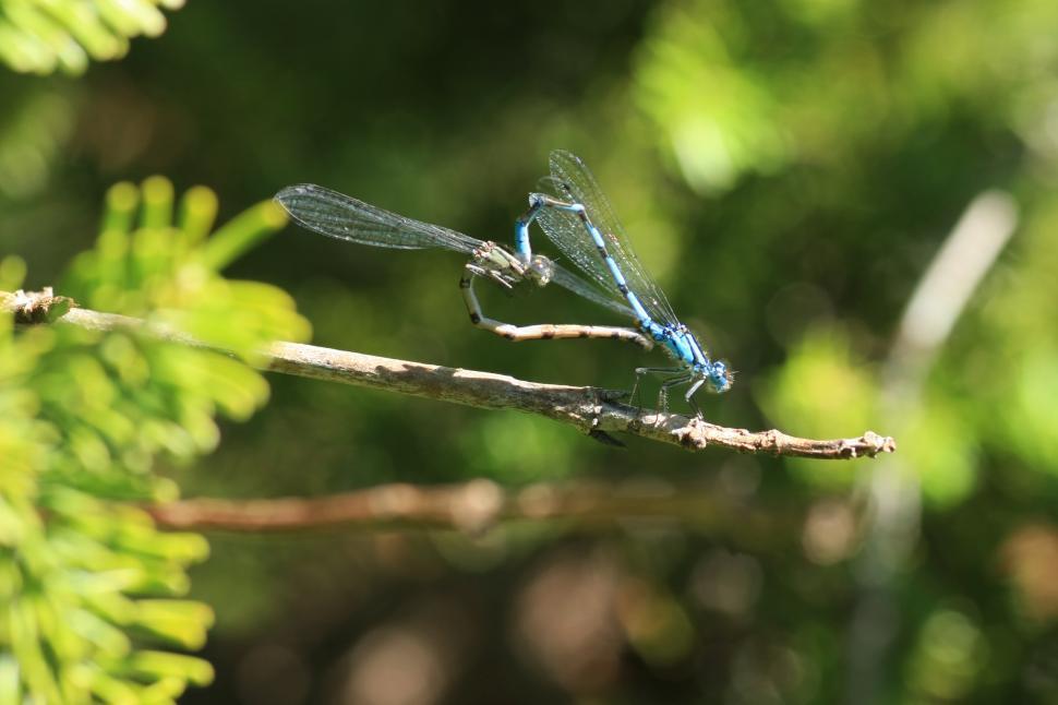 Download Free Stock Photo of Damson Fly
