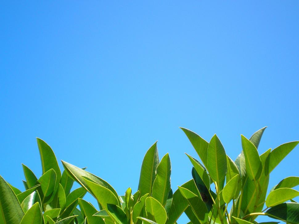 Download Free Stock HD Photo of Cloudless Sky Online