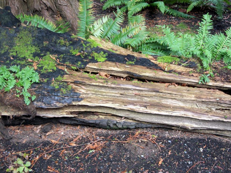 Download Free Stock HD Photo of Burnt Log Online