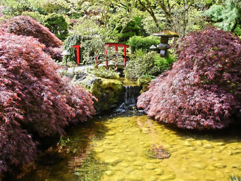 Download Free Stock HD Photo of Japanese Pond Online