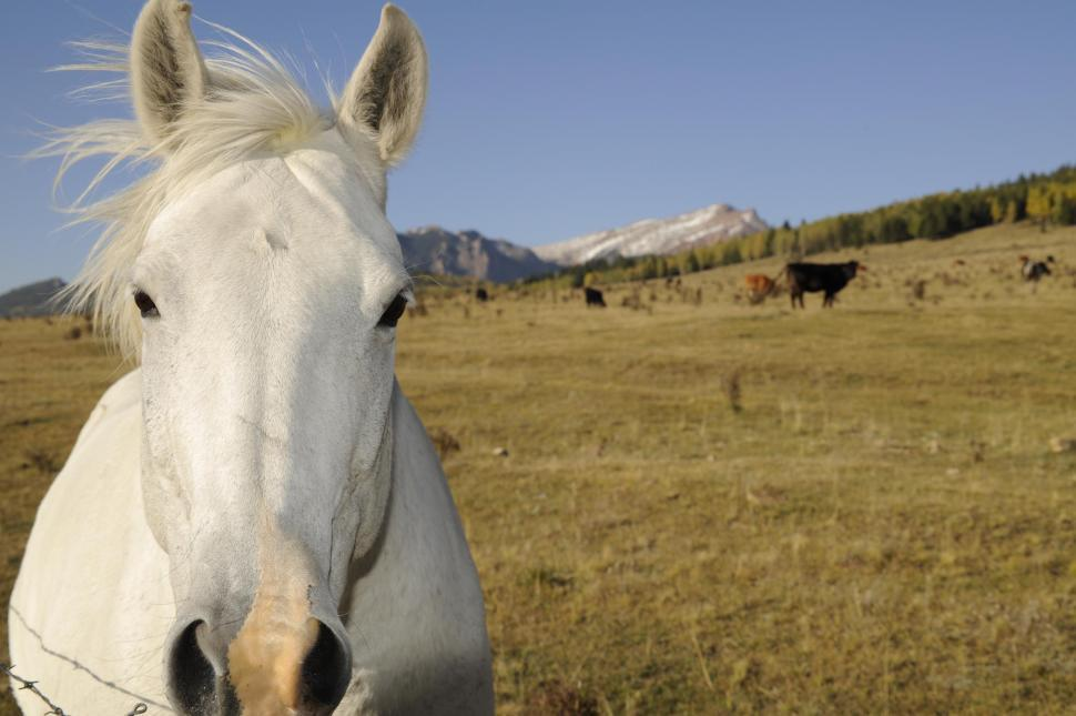 Download Free Stock HD Photo of white horse Online